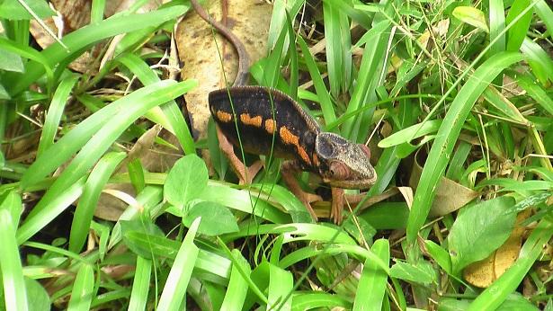 Post 16 Chameleon 1