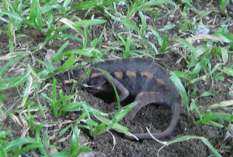 Post 16 Chameleon 3